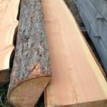 fir half logs